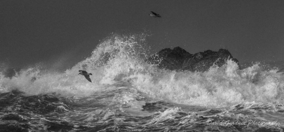 Wave and Gulls B&W-1