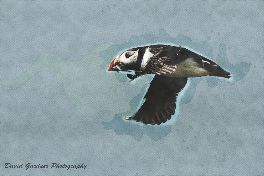 SquickerArt PUFFIN 1 20150621 copy